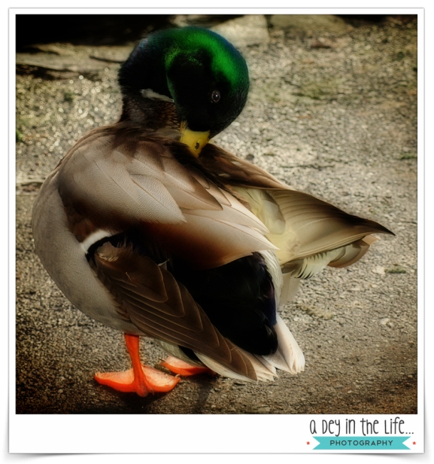 DuckBlog