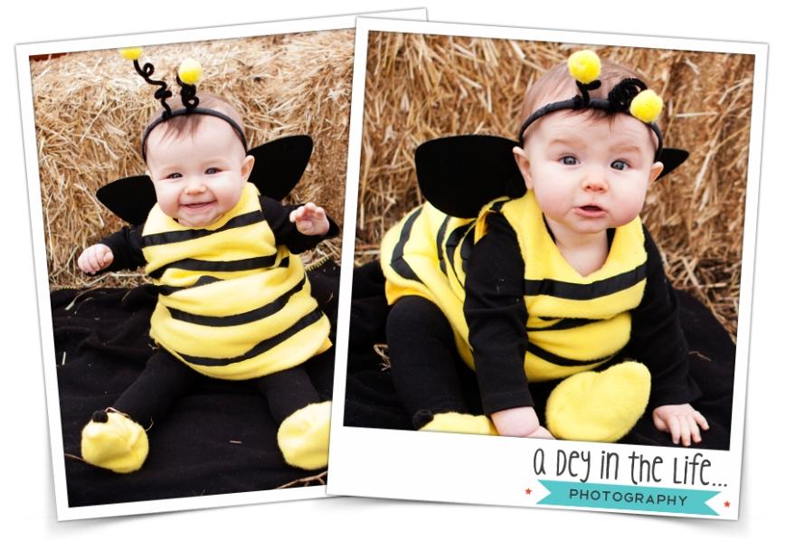 BeeBlog5